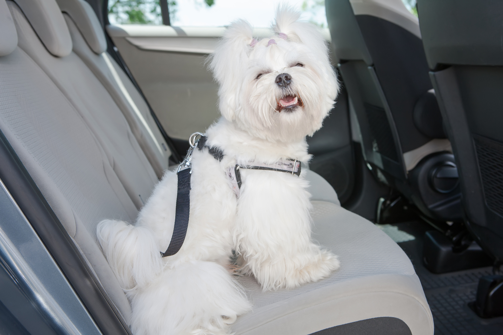 Animal Cruelty Seat Belt Safety - New Jersey SPCA Backtracks on Animal Restraint Enforcement