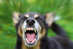 Dog Bite 300x200 - It's Always Sunny in Philadelphia Stars Sued Due to Dog Attack